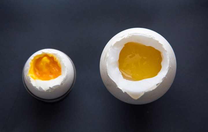 Goose egg compared to a hen egg © Camille Oger