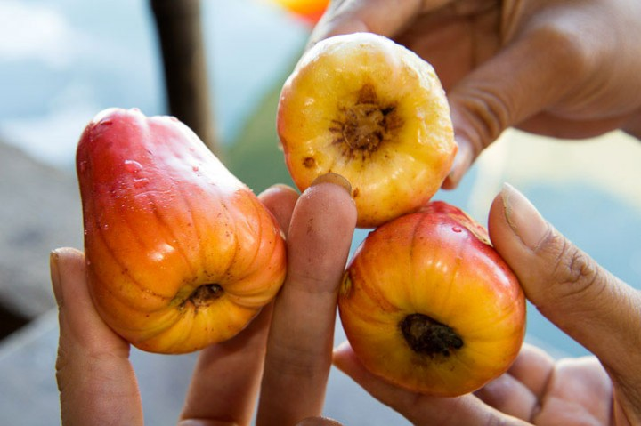 Cashew apples from Palawan, Philippines © Camille Oger