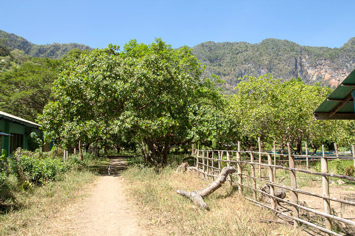 Cashew trees in Coron Island, Palawan © Camille Oger