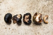 Different burned cashew nuts © Camille Oger