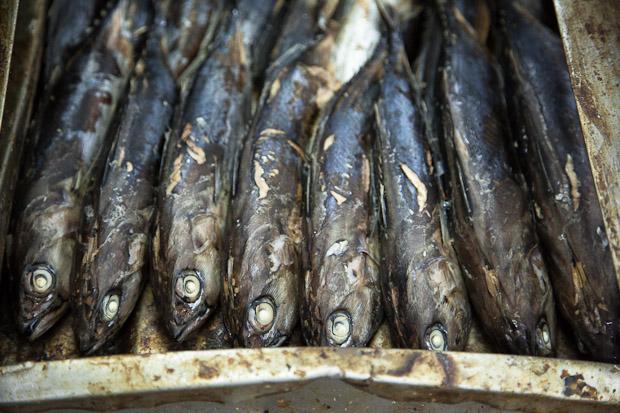 Bonites pré-cuites pour Ocean Canning © Quentin Gaudillière