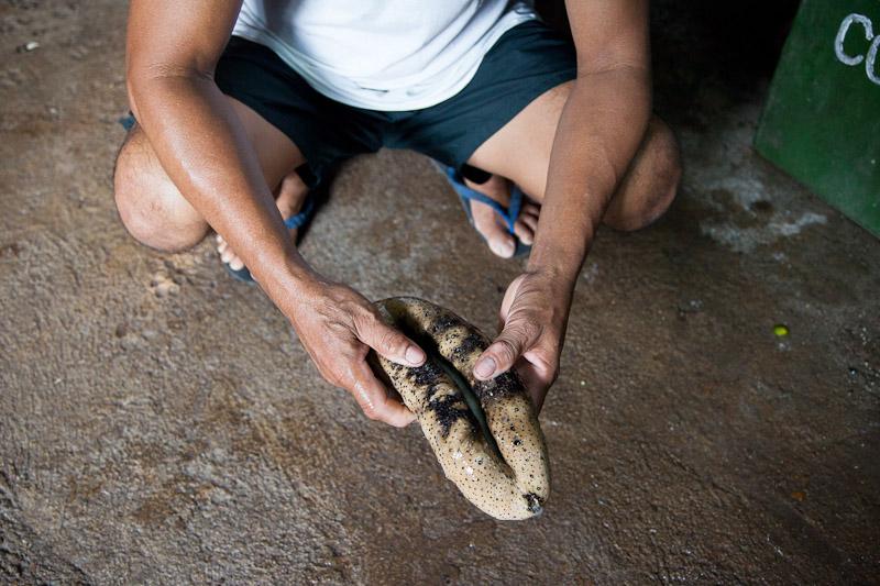 Le susuan, le plus cher des concombres de mer © Quentin Gaudillière