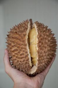 Durian mûr © Quentin Gaudillière