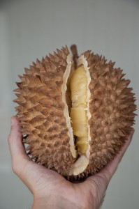 Ripe durian © Quentin Gaudillière