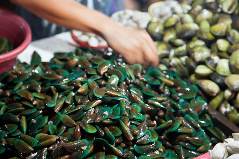 Moule verte des Philippines © Quentin Gaudillière