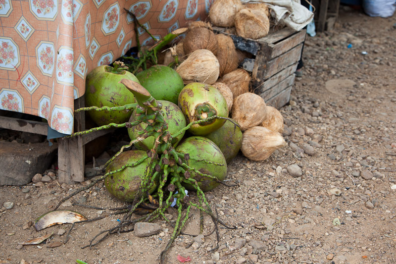 Buko and mature coconuts © Quentin Gaudillière