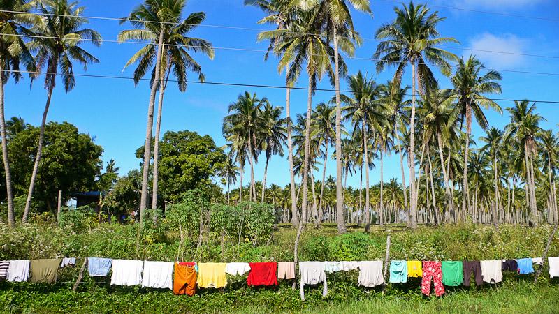 Plantation de cocotiers à Romblon, Philippines © Camille Oger