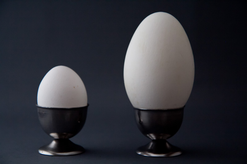 Chicken egg and goose egg © Camille Oger