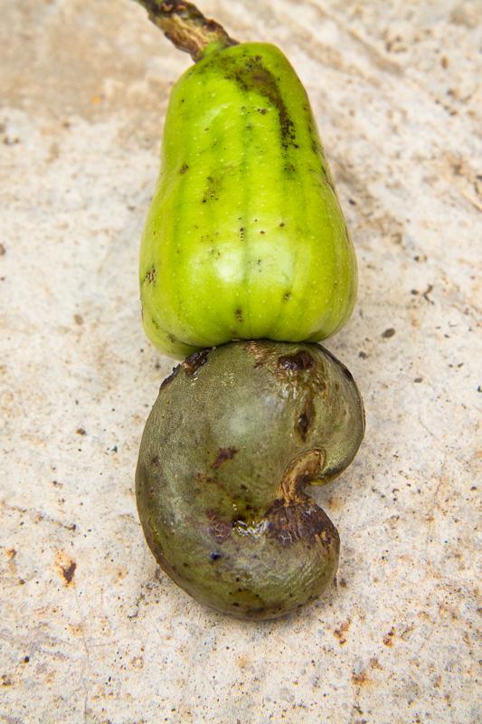 Cajou entière, avec sa pomme et sa coque © Camille Oger