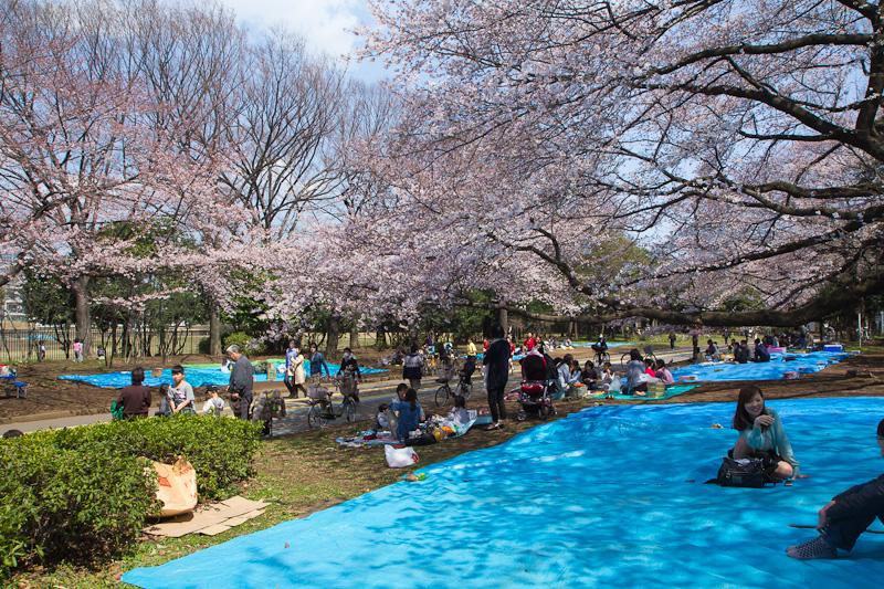 Hanami à Tokyo © Camille Oger