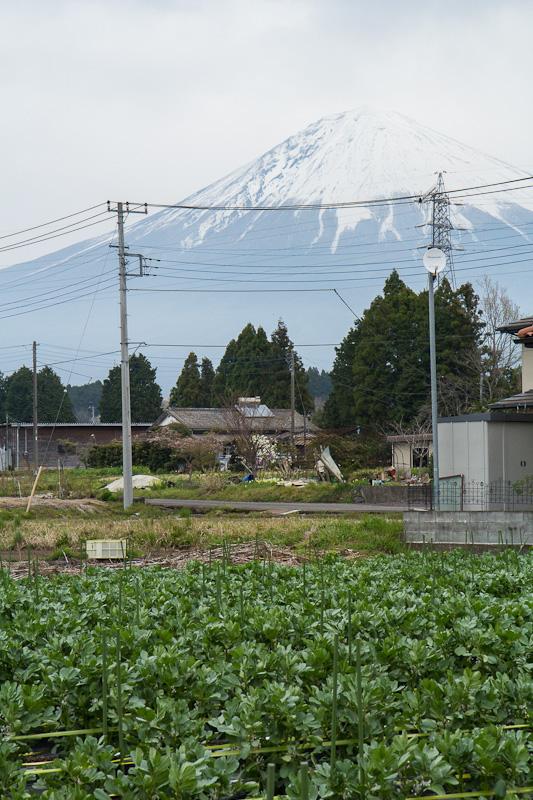 Les fèves de Monsieur Matsuki devant le mont Fuji © Camille Oger