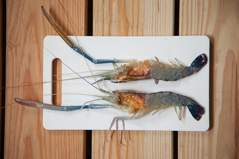 Découpe d'une crevette d'eau douce © Quentin Gaudillière