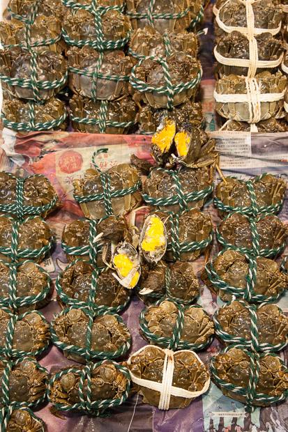 Crabes chinois, femelles pleines d'oeufs © Quentin Gaudillière