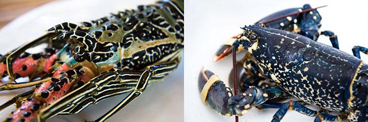 Tête de langouste ornée et tête de homard breton © Camille Oger