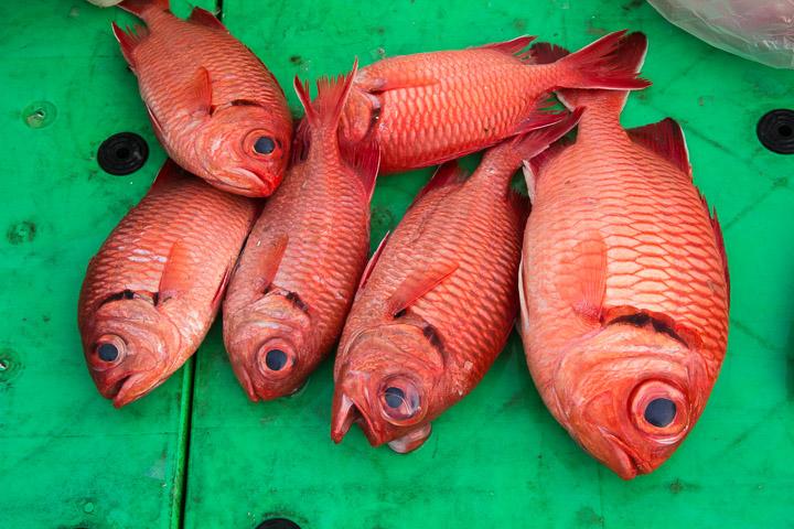 Heteropriacanthus cruentatus, poisson tropical par excellence, au marché © Camille Oger