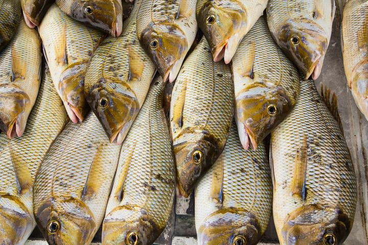 Motifs halieutiques à Penghu © Camille Oger