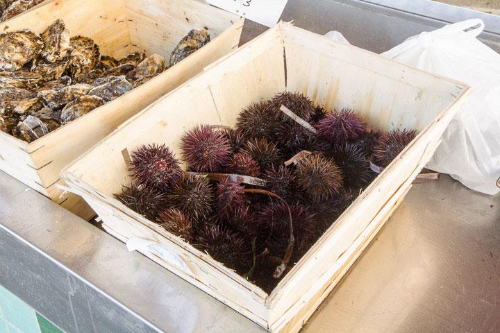 Oursins au stand de pêche locale de Golfe-Juan © Camille Oger