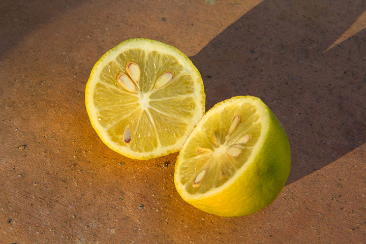 Citron Menton en coupe © Camille Oger