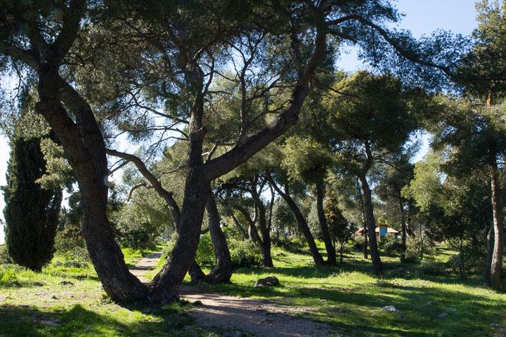 Collines boisées, le milieu idéal pour les asperges sauvages © Camille Oger