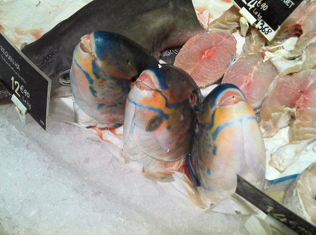 Les têtes des poissons-perroquets de Casino © Camille Oger