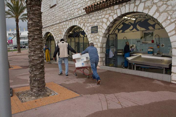 On dépose la prise du jour à la halle aux poissons du Cros © Camille Oger