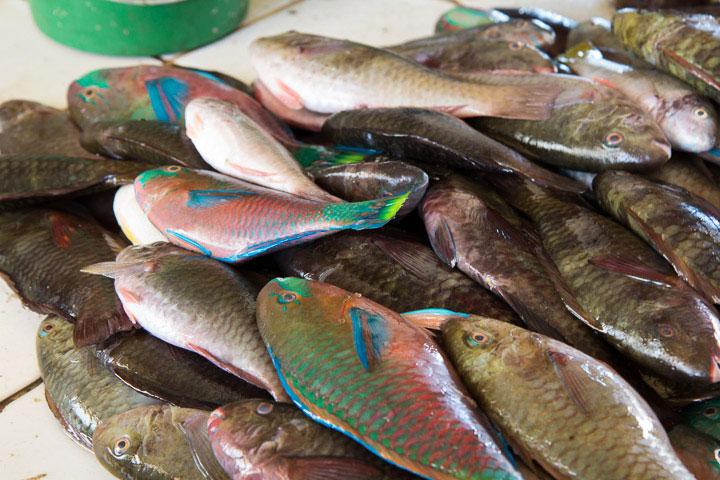 poisson atlantique france