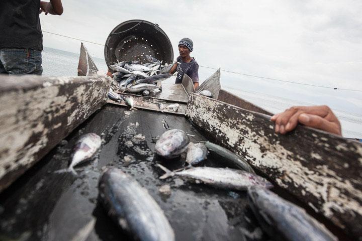 Les bonites sont débarquées au port de General Santos © Quentin Gaudillière