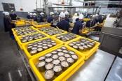 Préparation de conserves de bonite à l'usine Ocean Canning, General Santos © Quentin Gaudillière