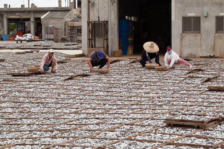 Producteurs de poisson séché, Taïwan © Quentin Gaudillière