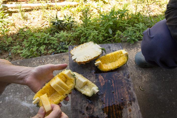 Dégustation d'ananas improvisée dans une plantation © Camille Oger
