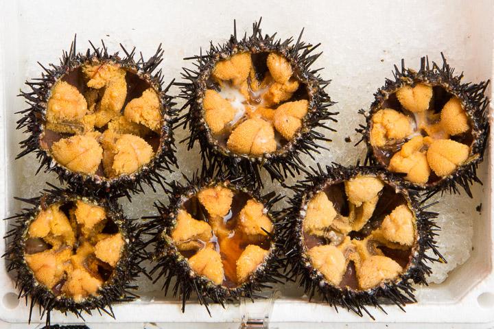 Oursins prêts à déguster au marché d'Hakodate © Camille Oger
