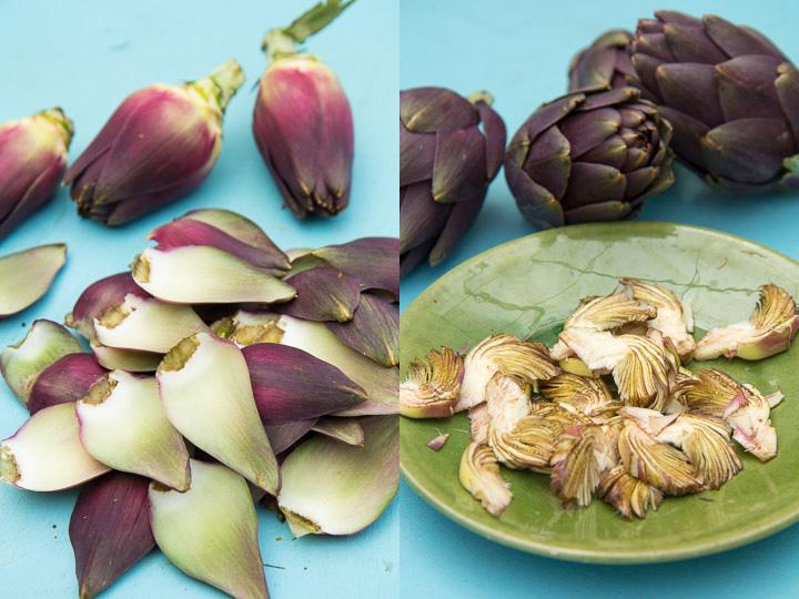 Petits artichauts d'ici, variété violette épineuse © Camille Oger