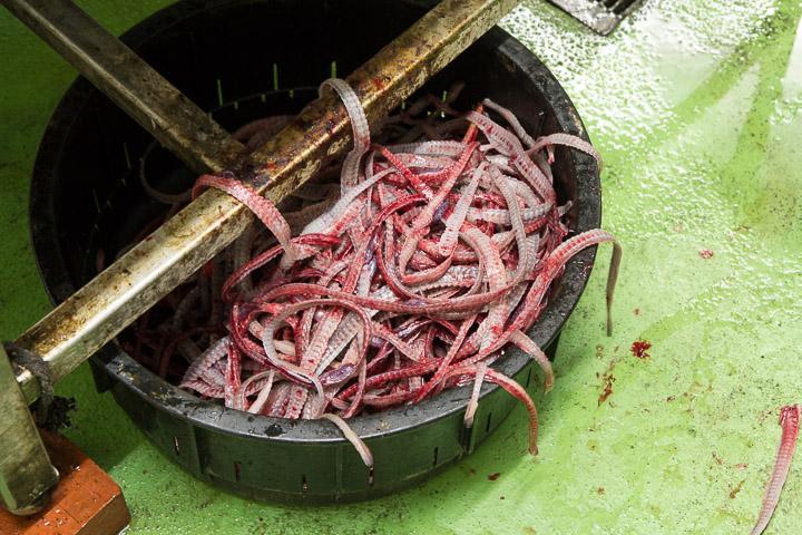 Précieuses arêtes d'anguille, pour faire la sauce kabayaki ©Camille Oger
