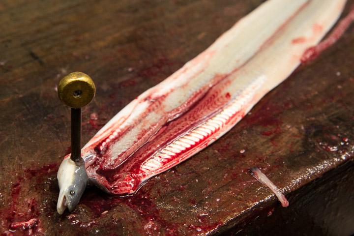 Jolie petite anguille ouverte, vidée et désossée © Camille Oger