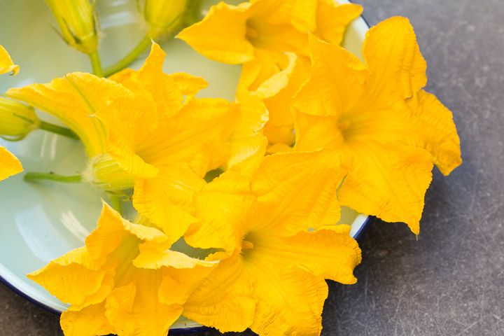 Fleurs de courgette du jardin © Camille Oger