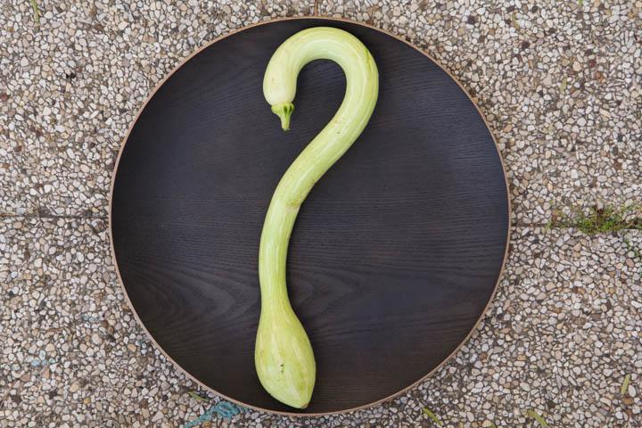 L'interrogation de la courgette © Camille Oger