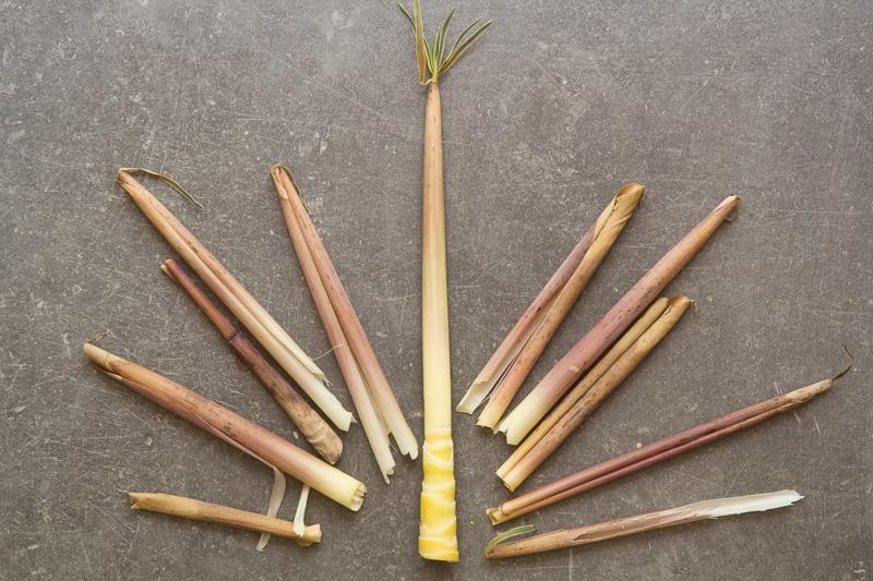 L'épluchage du bambou © Camille Oger